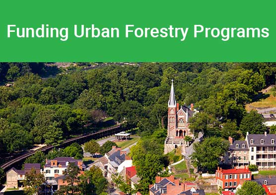 Funding urban forestry thumbnail