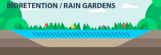 bioretention / rain gardens